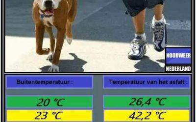 Honden en de warmte