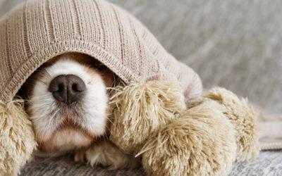 Oproep 'meedoen aan pilot vuurwerkangst bij honden'